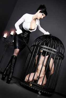 chastity slave in a cage